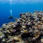 Kunjungan Wisatawan Mancanegara Ke Port Douglas And Daintree Meningkat