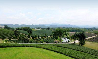 Menikmati Ritme Kehidupan Chiang Rai