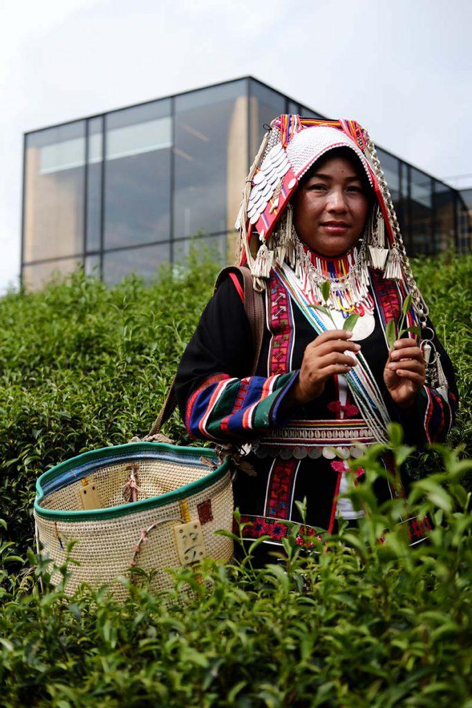 Wisata kebun teh Chiang Rai