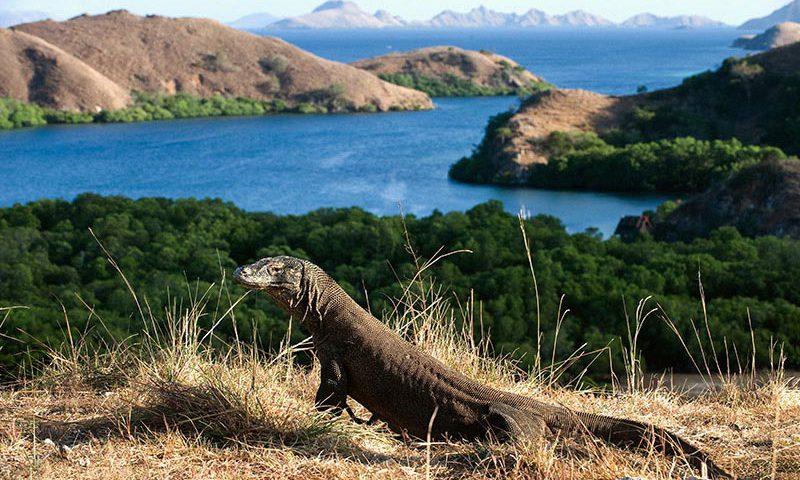 Dijadikan Mass Tourism, Pulau Rinca Tak Lagi Eksklusif