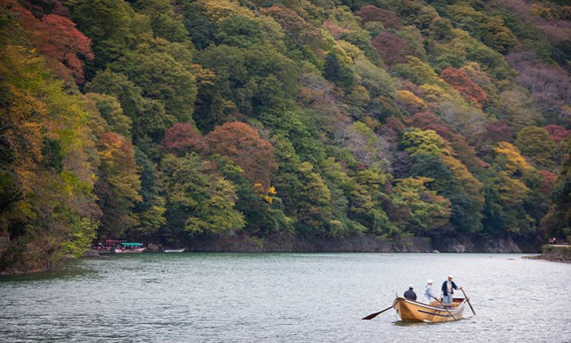 Arashiyama, Pesona Hutan Bambu, Kuil, dan Taman Kera