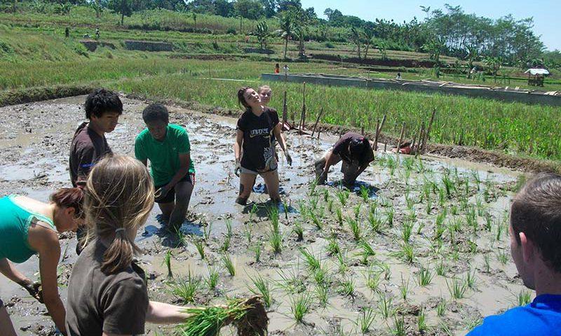 Mencicipi Kehidupan Desa di Kota Semarang