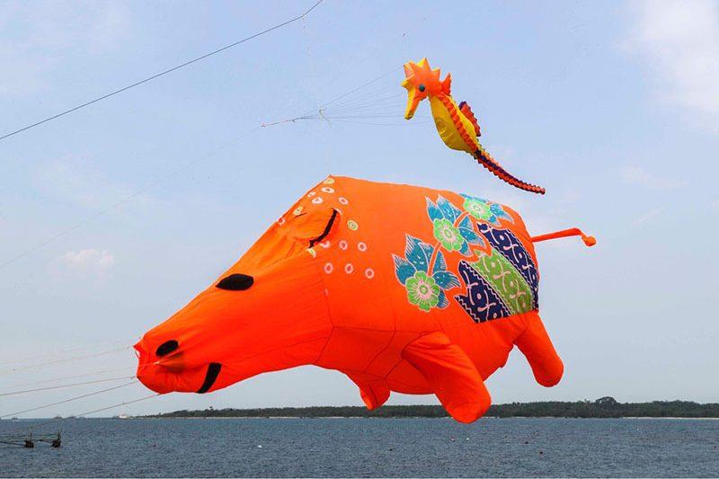 Rhino Kites Festival