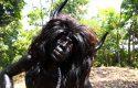 Atraksi Kebo-Keboan jadi Daya Tarik Wisatawan ke Banyuwangi