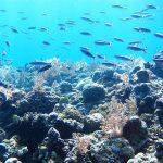 Our Ocean Conference Tekankan Pentingnya Konservasi Perairan