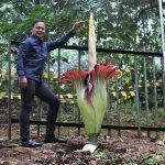 Bima Arya Tata Bogor demi Kebun Raya Bogor