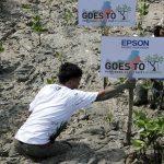 Epson Indonesia Rayakan Ulang Tahun dengan Menanam Mangrove